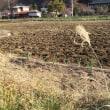 2017年古代小麦の種蒔き終了