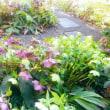 庭のヘレボレス