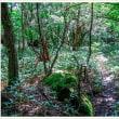 登山道 Vol.3 熊笹の道