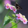 「蝶々が・・・」