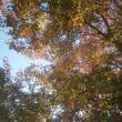 真澄の空に木々は燃え・・・Deep autumn in Cleavers garden・・・