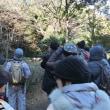 稲毛海浜公園の自然観察会、検見川浜の赤富士(?)