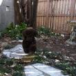 お庭は楽しいね~~~
