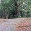 近所の公園にて、紅葉は遅い