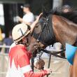 アローシュドゥパト ハイビスカスデビュー2歳新馬