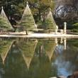 蕎麦に梅と福寿草~早春の神代植物園