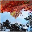 軽井沢 「雲場池」 の紅葉 (3の2) ★ 2018.11.14 ★