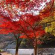 天神峡、おそいかな…紅葉まだ見られます