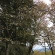 吉野山へ、、