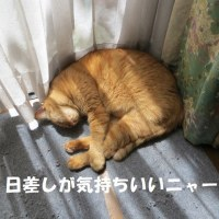 昼寝の夢は何をみている?
