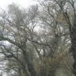 高齢化、過疎化により伐採もままならず・・・伸び放題の樹木整備難しく