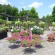 草津市 水生植物園