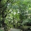 博多の森をウオークする