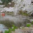 信濃路・・・北信濃の須坂市・・・臥龍公園でお花見