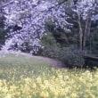 桜が咲きました【3】
