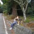 富士山すそ野一周ウォーキング(全17回);7回目(4);村山浅間神社参拝;;7回目の総括