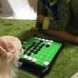 オセロにおじゃま犬