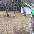 年内に終わる筈の 剪定と除草作業 茨城 利根