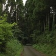 Forest pass⁈ 田舎道を登り下りして