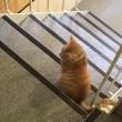 猫活はじめてます