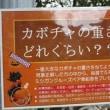 ブログ260 柳が崎湖畔公園見学記