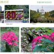植物園に見る秋の花