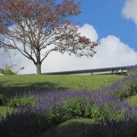 今頃の花回廊