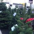 今朝の空 と クリスマスツリーのお話
