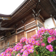 『季節の花』 寒菊