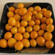 庭で採れた金柑 (今年5回目の収穫)
