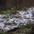 我が家初雪