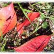 そろそろ紅葉、落ち葉の季節(^^♪緑や黄色赤 虫に食べられた穴の空いた造形美が 見事!