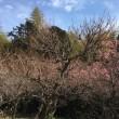 梅を観に、そして