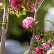 花彩々  山茶花の花