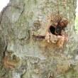 木々の剪定