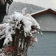 牡丹雪が降り、畑の雪が深い時には、野鳥の罠獲りが忙しかった