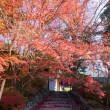 亀岡~大原野の紅葉
