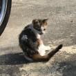 3匹の仔猫、失踪事件・・