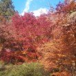 11月25日 紅葉