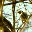 近所の野鳥を撮って来ました