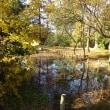 水元公園/初冬の水辺を徃く。