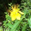 黄色い 花が綴る季節