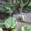ひっそりと咲く ランの花!