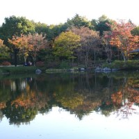 昭和記念公園の紅葉・・2