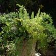 屋外の葉物寄せ植え