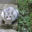 ちび猫 -磯子ヴィレッジ-