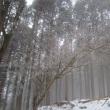 国見山の霧氷