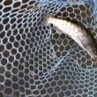 Fish On 王禅寺<9月26日>