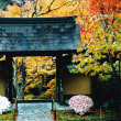 京都・紅葉 アーカイブス 1998年 三千院・寂光院