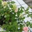 昨年のバースディプレゼントの花は・・・・